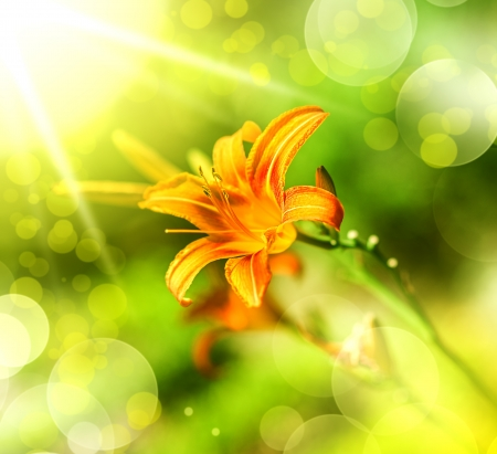 orange lily: Art design with defocus orange lily flower on blur green and yellow background Stock Photo