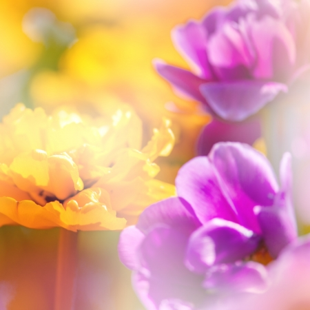 colorize: Defocus beautiful purple and yellow flowers. Image with bright summer color filters  Stock Photo