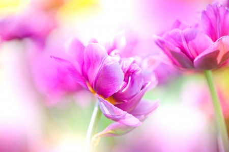 colorize: Defocus beautiful purple flowers. Image with bright summer color filters  Stock Photo