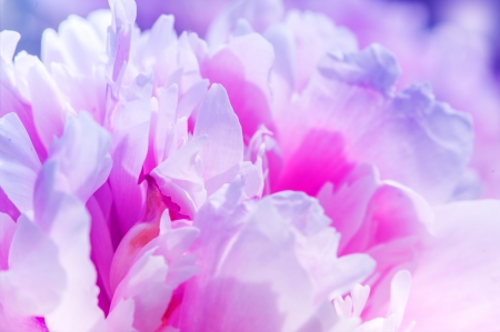colorize: Defocus beautiful pink flowers  abstract design with color filters