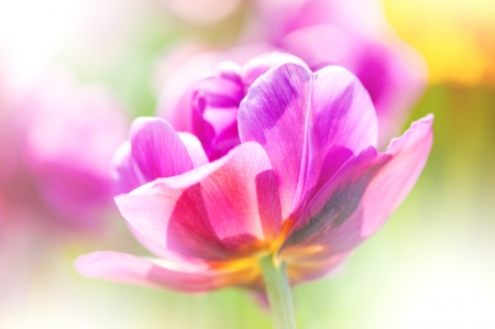 colorize: Defocus beautiful pink flower  abstract design with color filters