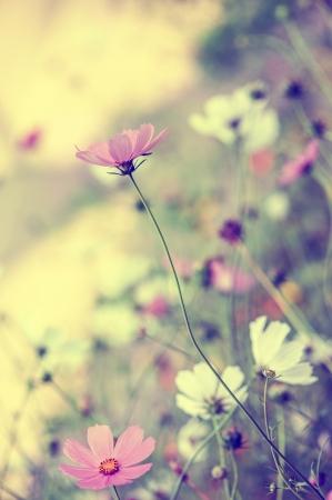 wild botany: Beautiful defocus blur pastel background with tender flowers  Floral art design in retro style