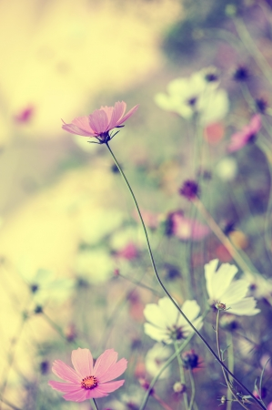 Beautiful defocus blur pastel background with tender flowers  Floral art design in retro style