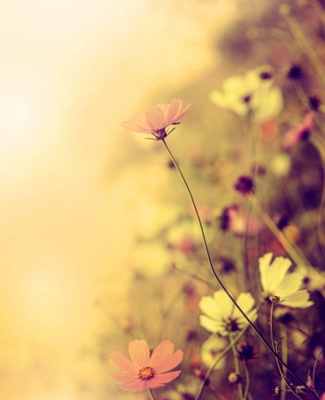 Beautiful defocus blur retro background with tender flowers. Floral art design in retro style Stock Photo