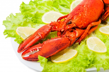 Cooked European common red lobster on plate with green leaves and lemon photo