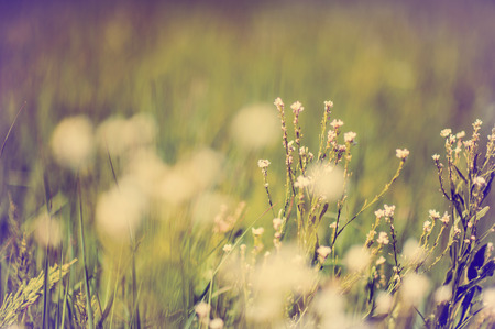 defocus: Defocus blur beautiful floral background  Purple and white spring flower on meadow and copy space Stock Photo