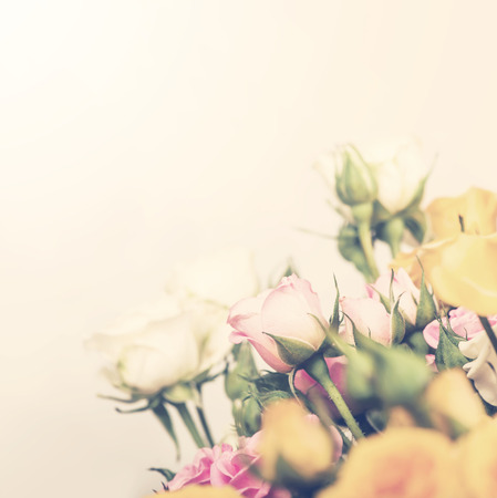 colorize: Defocus bunch of roses. flower with soft pastel color filter Stock Photo