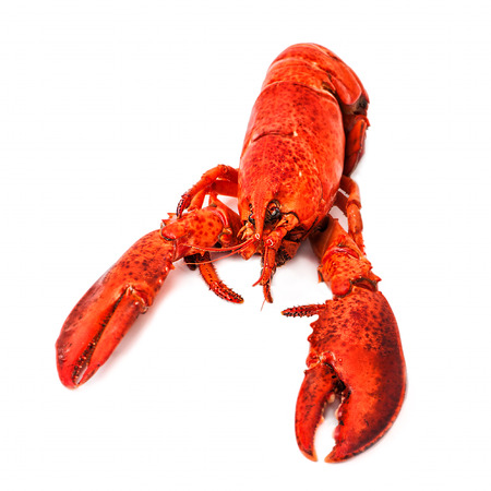lobster isolated: Macro view of cooked red lobster isolated on a white background