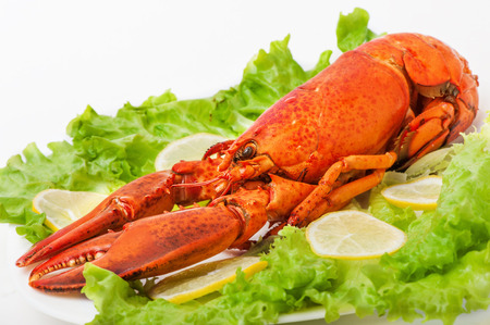 lobster dinner: Cooked and boiled red lobster in a white plate with lemon and green lettuce