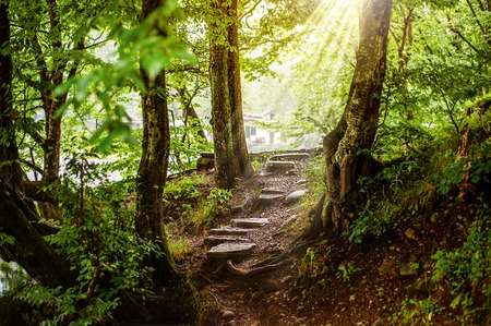 forest path: path and steps from stones in the beautiful magic forest and sun rays through branches Stock Photo