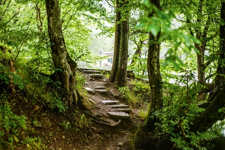 stone steps: path and steps from stones in the beautiful magic forest and sun rays through branches Stock Photo
