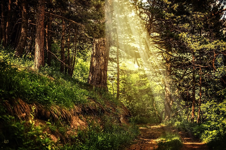 moss: path in the beautiful magic forest and sun rays through branches