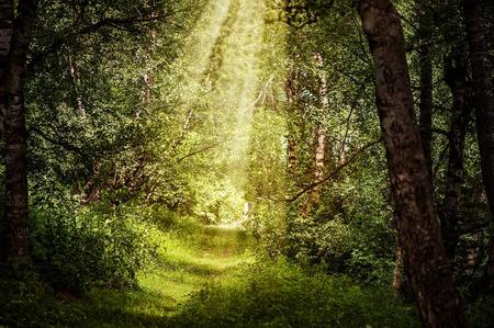 zonnestralen door takken en pad in het prachtige magische bos Stockfoto