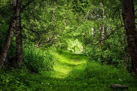 zonnestralen door takken en het pad in het mooie magische bos Stockfoto