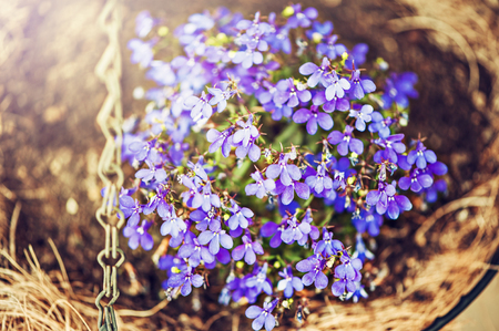 Blur defocus floral spring background texture with Myosotis in decorative woden flower pot Stock Photo