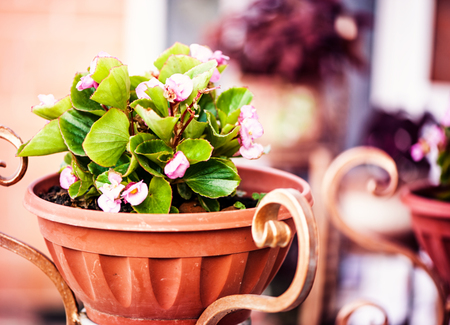 Blur defocus floral spring background texture with Viola in decorative flower pot