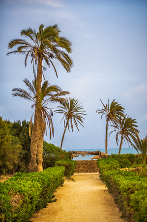 Way to the sandy beach on tropical resort with palm trees Stock Photo