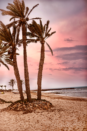 Card from tropical vacations - palm trees on white sand beach. Pink sky from sunset or dawn Stock Photo