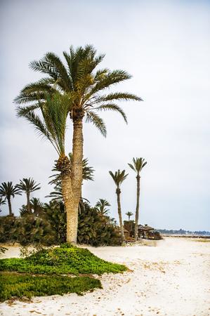 tropical resort with palm trees on sandy beach near ocean