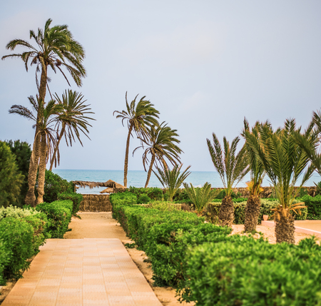 Why to the sandy beach on tropical resort with palm trees