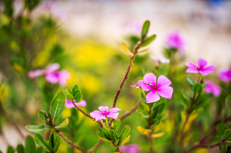 Defocus beautiful floral background. Pink flowers with green leaves on grass Stock Photo