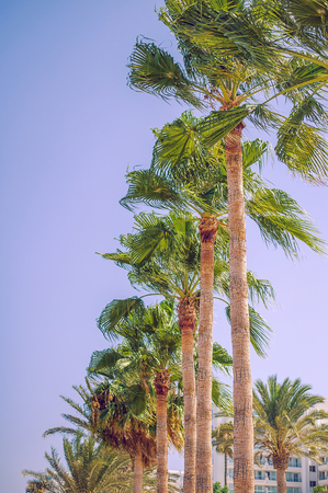 tropical resort with decorative palm trees near beach Stock Photo