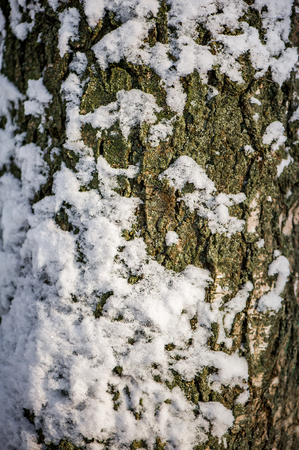 Defocus beautiful blur winter background - texture of snow on bark of a tree trunk Stock Photo