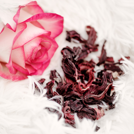 Dry eco rose petals or hibiscus tea and a lively pink rose on a light fluffy background. Organic antioxidant Stock Photo
