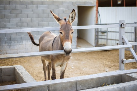 Young beautiful donkey is standing in the stall behind the fence outside