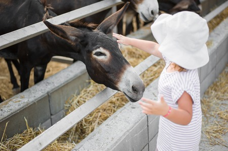 Young beautiful donkeys are standing in the stall behind the fence outside. Little girl stroking baby colt of a donkey on the head Stock Photo