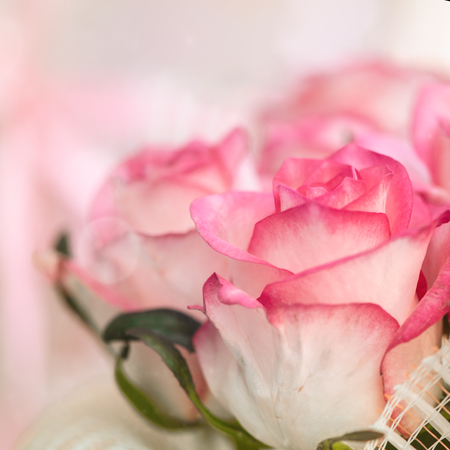 Blur defocus flower background. Pink roses holiday texture Stock Photo