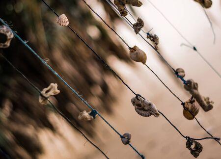 Beautiful traditional Shell jewelery hangs on a tree on threads in the tropical resort of Hikkaduwa in Sri Lanka