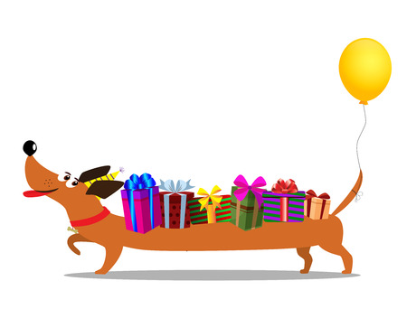 Cute cartoon long dachshund in birthdat hat, with baloon on the tail carrying gift boxes upon the back isolated on white background. Vector illustration, clip art. Birthday greeting card character.