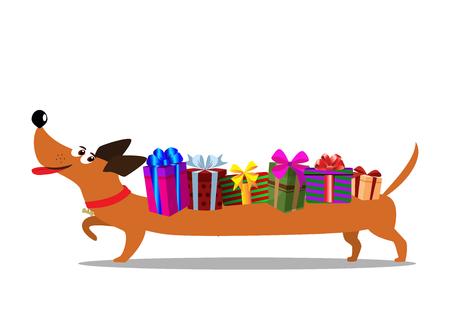 흰색 배경에 고립 뒤쪽에 선물 상자를 들고 귀여운 만화 긴 닥스 훈트. 벡터 일러스트 레이 션, 클립 아트. 배너, 웹, 인사말 카드에 대 한 축제 개념.