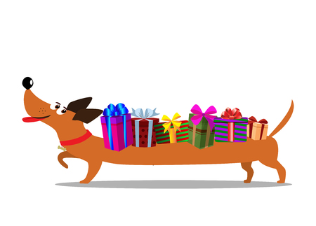 Cute cartoon long dachshund carrying gift boxes on the back isolated on white background. Vector illustration, clip art. Festive concept for banner, web, greeting card.