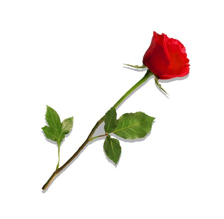 Bellissimo bocciolo di rosa rossa sul gambo lungo