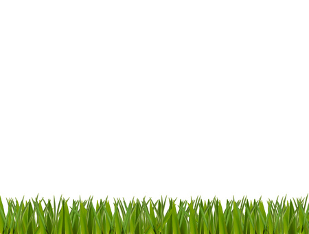 Green realistic grass horizontal border isolated on white background. Illustration