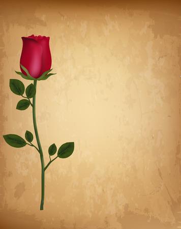 Singola rosa realistica rossa sul vecchio sfondo di pergamena di carta vintage. Modello per biglietto di auguri, invito. San Valentino ama lo sfondo del matrimonio con spazio per il testo. Illustrazione vettoriale altamente dettagliata.