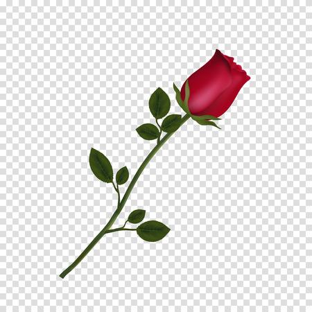 Illustrazione vettoriale di fiore fotorealistico, altamente dettagliato di rosa rossa isolato su sfondo trasparente. Bellissimo bocciolo di rosa rossa su stelo lungo. Clip art per San Valentino, amore, matrimonio, design.