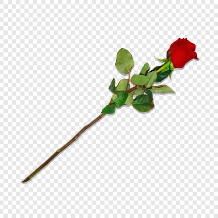 Photo réaliste, rose rouge très détaillée sur longue tige isolée sur fond transparent. Beau bourgeon de fleur. Clip Art pour la Saint-Valentin, amour, carte de voeux d'anniversaire de mariage. Illustration vectorielle