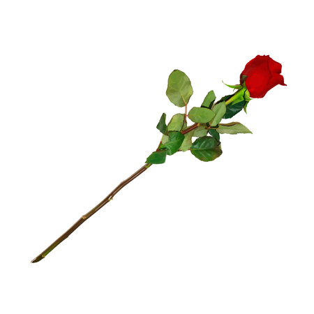 Photo Realistic, Highly Detailed Flower of Red Rose on Long Stem Isolated on White Background. Beautiful Bud of Ruby Rose with Leaves. Clip Art For Valentines, Love, Wedding Card. Vector Illustration