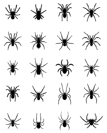 Black silhouettes of  spiders on a white background, vector Illustration
