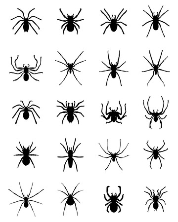 tarantula: Black silhouettes of different spiders