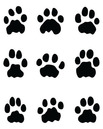 Black footprints of lions on a white background