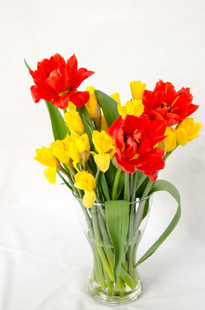 bunch of yellow daffodils and red tulips image photo