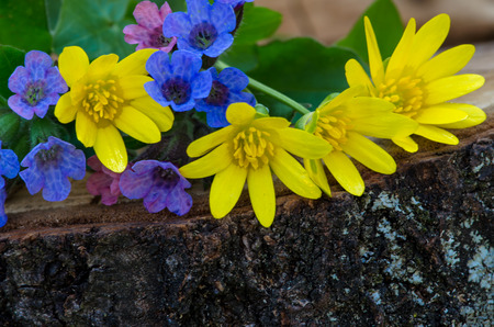 bunch of colorful flowers on wooden trunk photo
