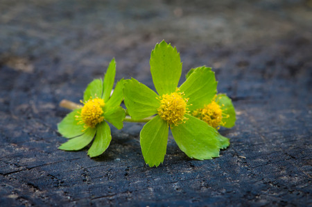detail of green flower on wooden background photo