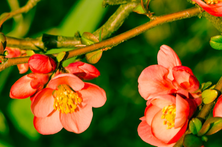 blossoming pink flower on green background photo