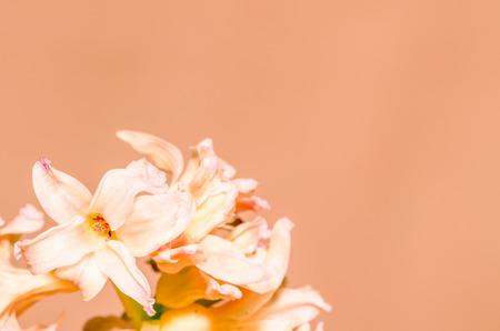 filtered: jacinto blanco filtra efecto retro