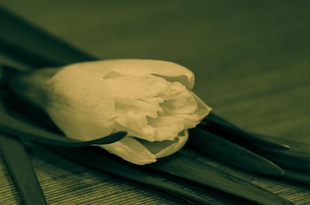 filtered: efecto flor del narciso amarillo filtrada Foto de archivo